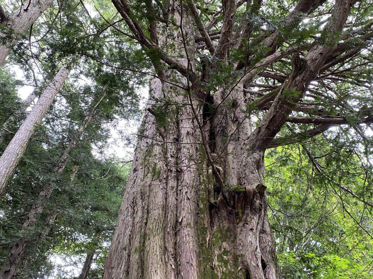 今日は『木の日』です!!